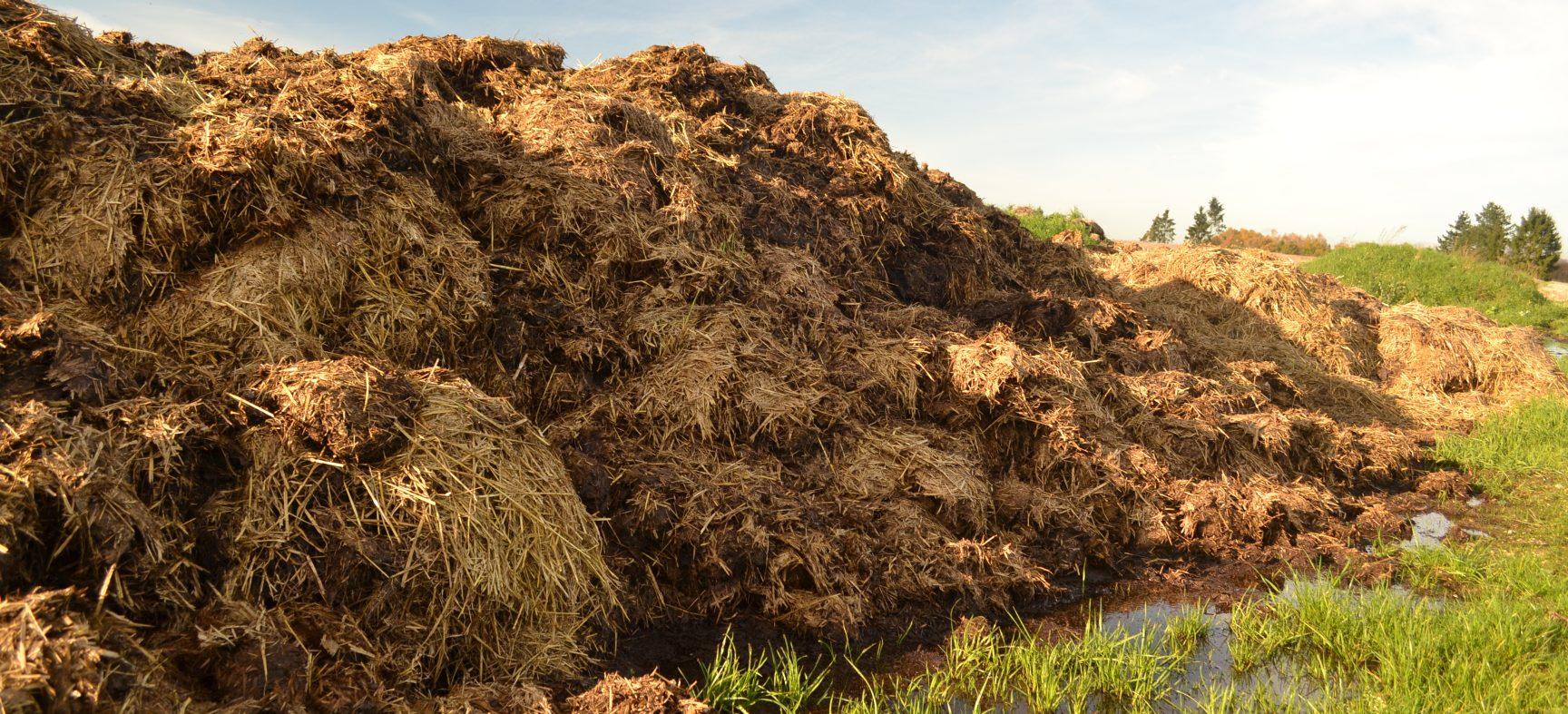 Le fumier : précieuse matière fertilisante ou polluant en quantités astronomiques ?