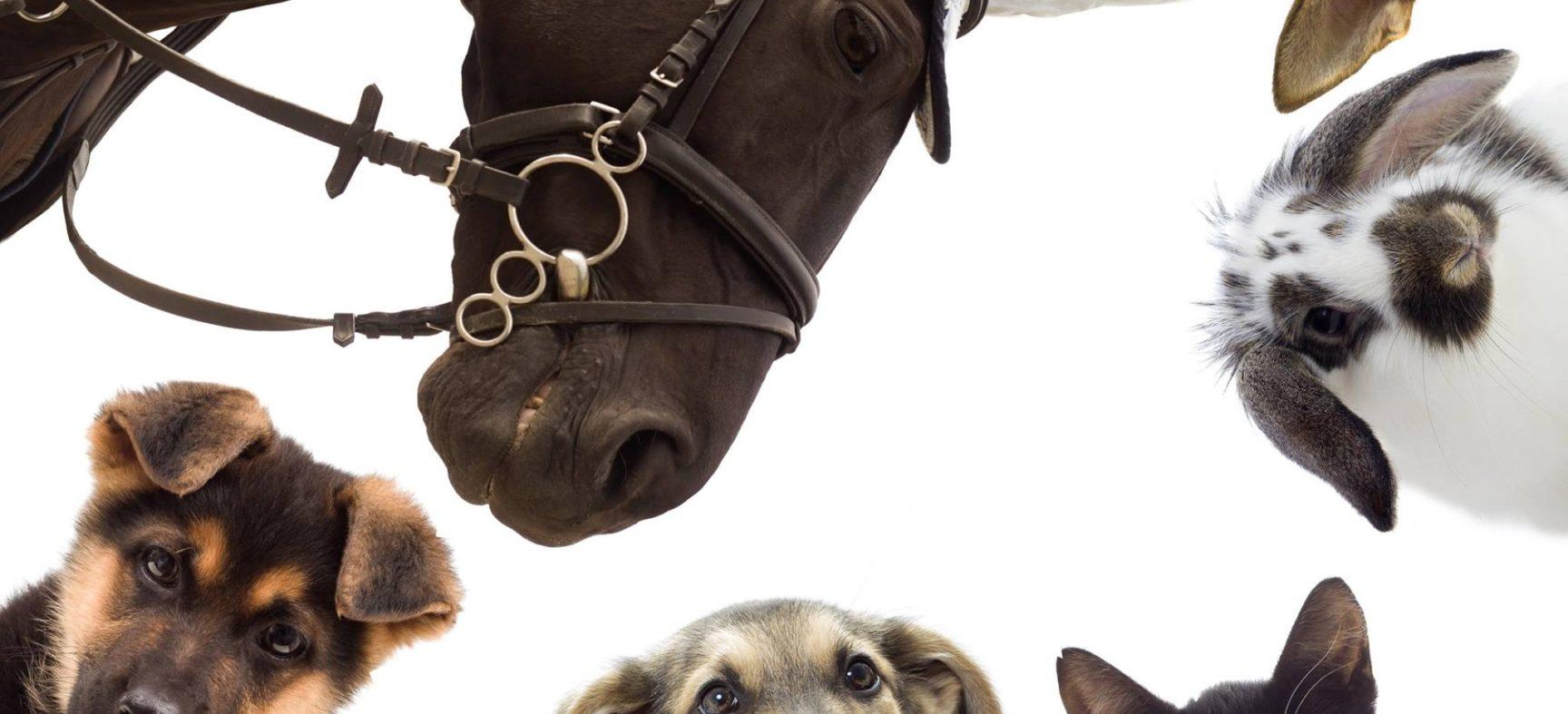 LA LOI BÊSA S'APPLIQUE-T-ELLE À L'UTILISATION DES ÊTRES ANIMAUX CAPTIFS COMME LES CHEVAUX UTILISÉS POUR LE DIVERTISSEMENT? - CAPSULE DAQ N° 16