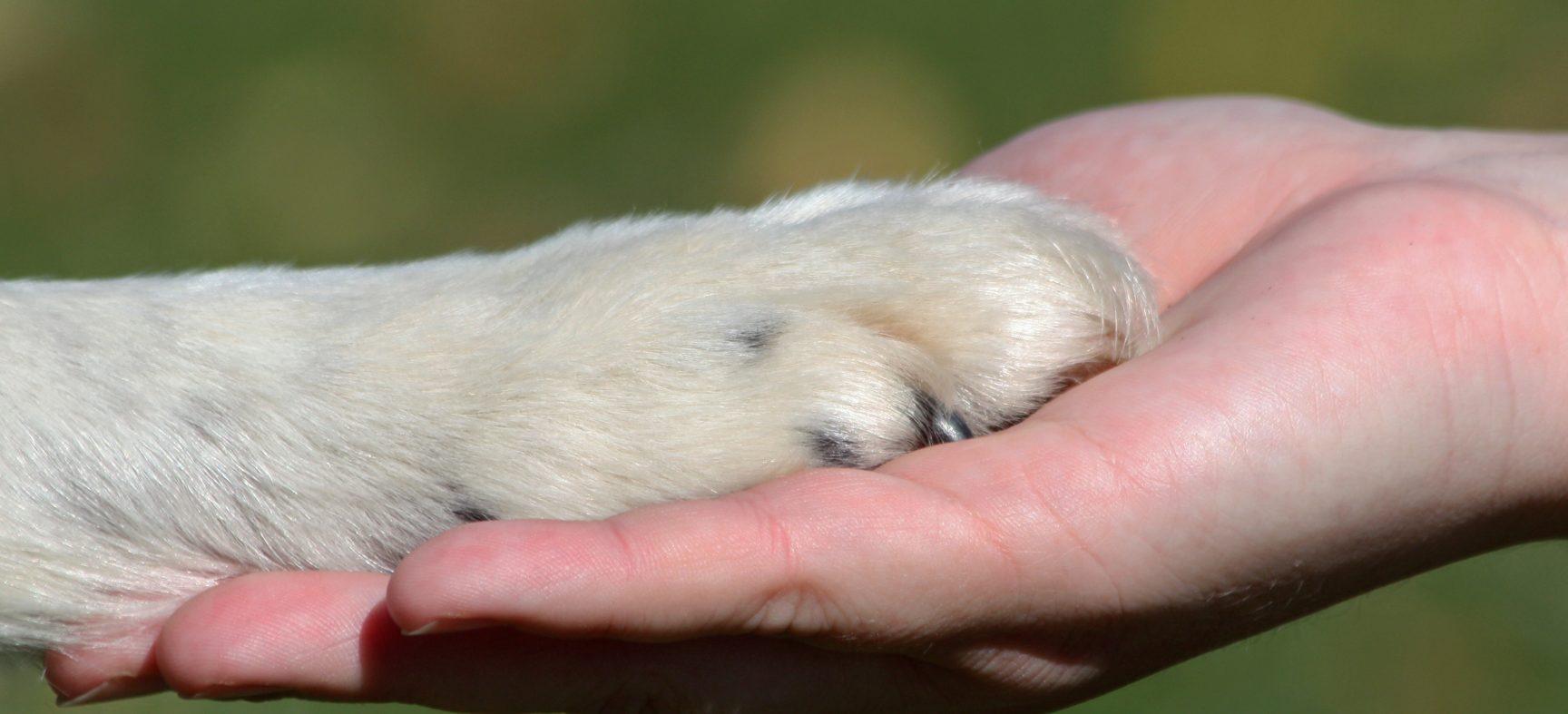 LES TERMES « SPECISME » ET « CARNISME » EN DROIT ET ÉTHIQUE ANIMALIERS - CAPSULE DAQ N° 41