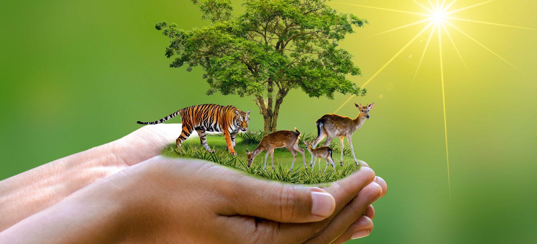 Colloque environnement jeunesse : Droits et justice | Atelier-discussion « L'environnement, les êtres animaux et le droit animalier »