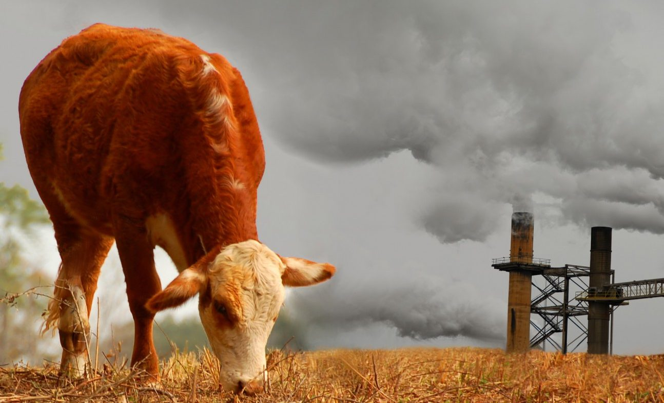 LE NOUVEAU DROIT ANIMALIER : QUELS SONT LES IMPACTS SUR L'ÊTRE ANIMAL ET SUR L'ENVIRONNEMENT ?