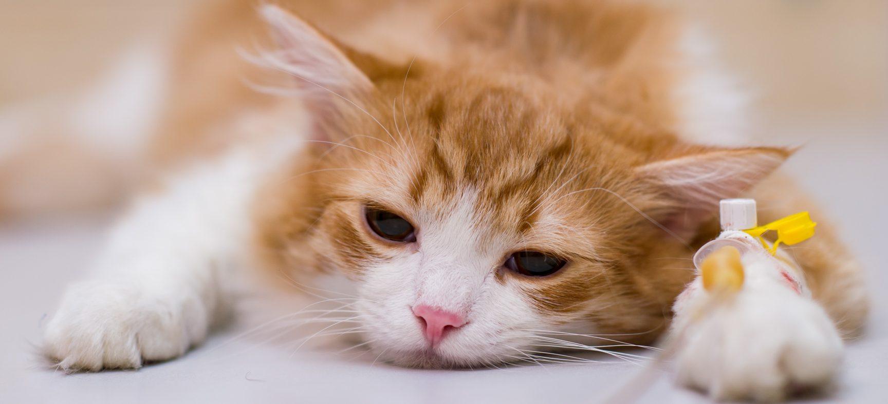 Vos souffrances psychologiques sont maintenant indemnisables en droit animalier  – CAPSULE DAQ N° 57