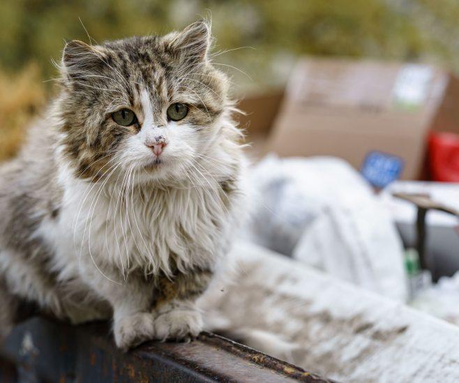 Les chats errants à Montréal – CAPSULE DAQ N° 62