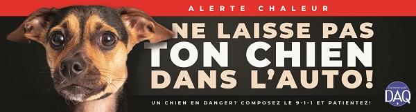 Droit animalier Québec