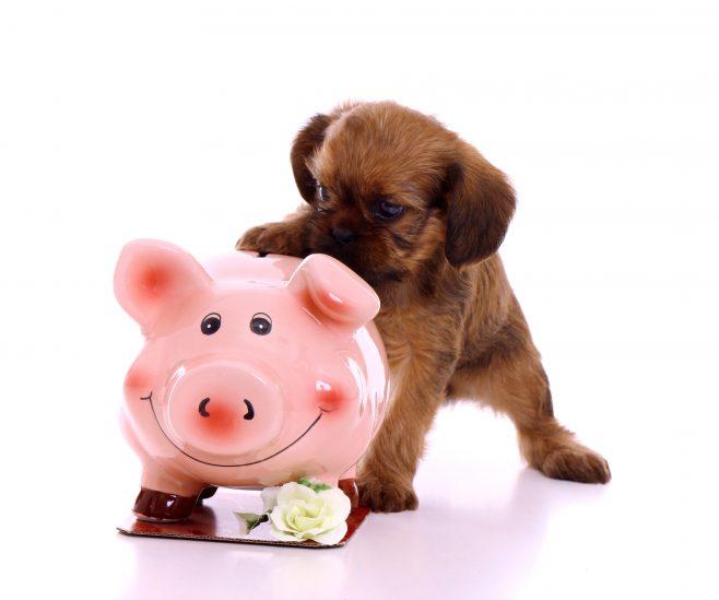 Votre engagement financier envers votre chien:45000$-Capsule DAQ N°65